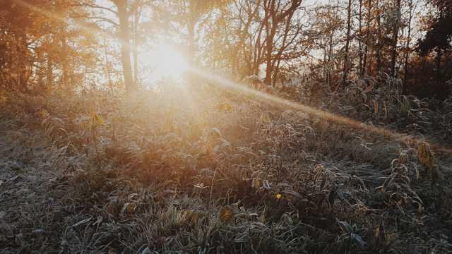冬季艳阳小丛林图片