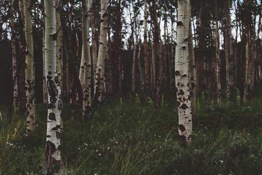 春光透过整齐森林的图片