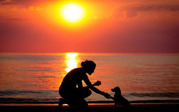 斜阳的海滩狗与人