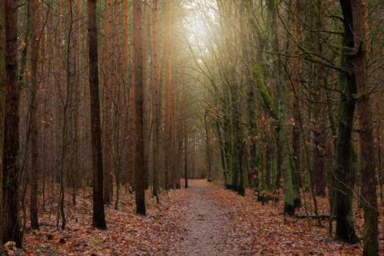 冬日树林枯叶景观图片