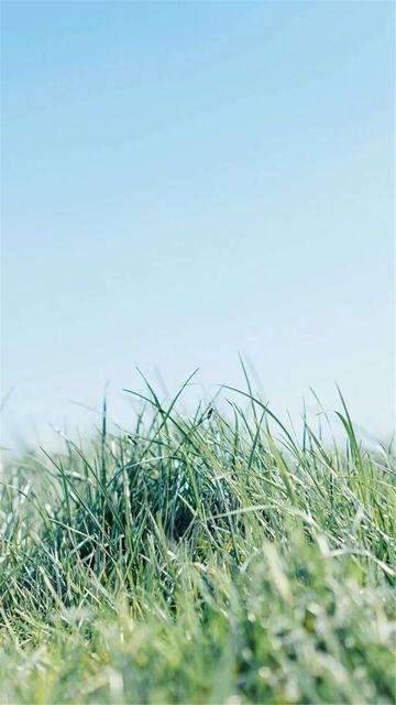 漂亮的绿色风光