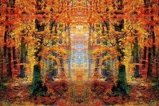 秋季树林图片