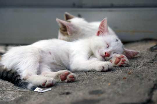 白色小猫睡觉图片