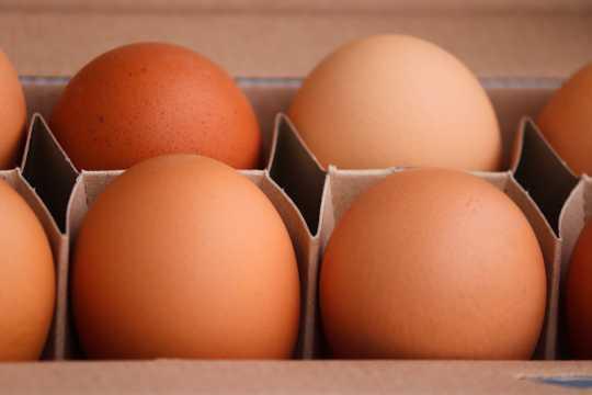 红壳土鸡蛋图片