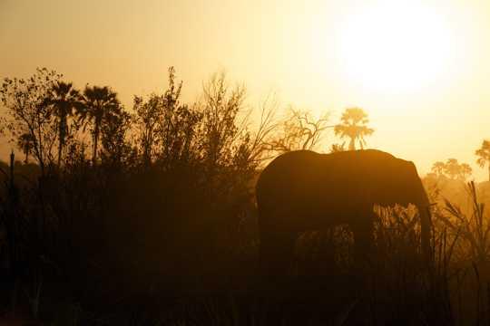 一头徒步的大象图片
