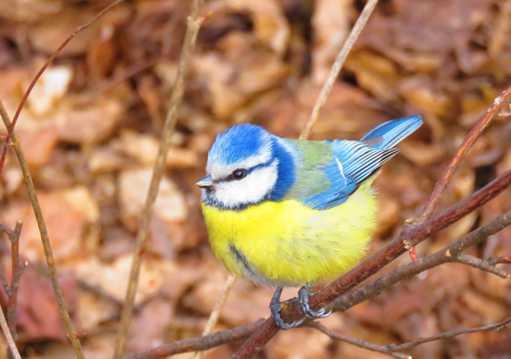 好看雀鸟图片