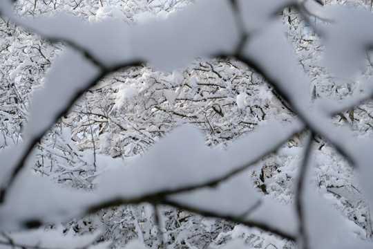 冬日树木雪景照相图片