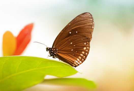 漂亮可人的蝴蝶图片