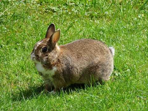 绿色草原上的兔子图片