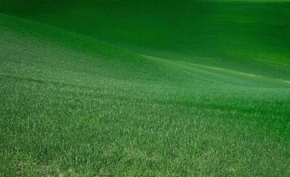 绿色护眼草地图片