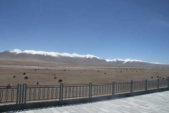 蓝天高山原野牛群图片