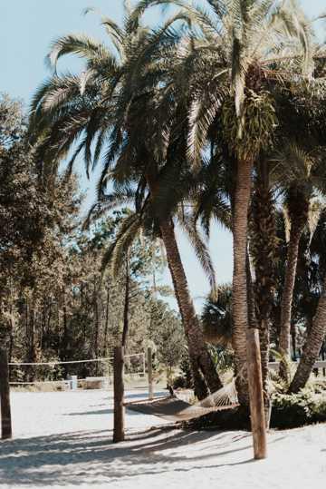 海滩椰子树自然风光图片