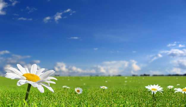 春季原野风光图片