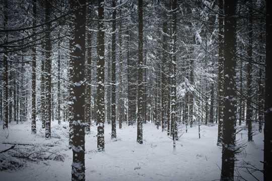 冷冬森林雪景图片