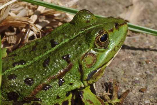 青蛙微距摄影