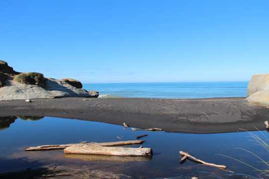 沙滩漂木图片