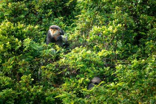 树林里的猴子图片