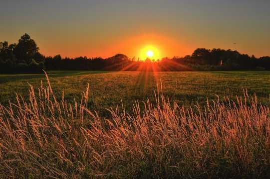 草场朝阳景致图片