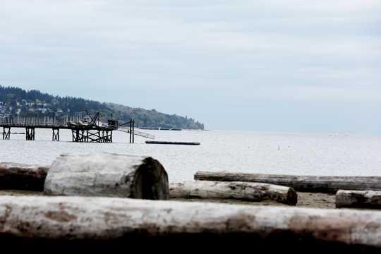 沙滩木材图片