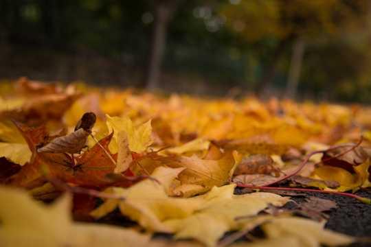 秋天黄叶景致图片