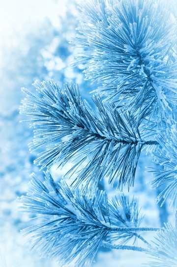 冬日植物特写图片