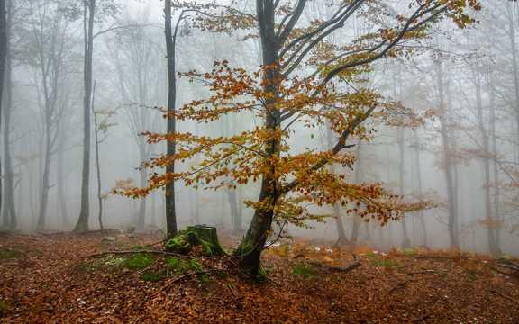 唯美的秋冬风景图片