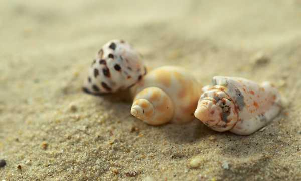 海滩贻贝图片
