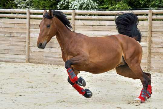 奔跑的棕色马图片