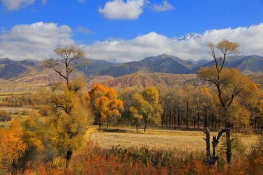 青海黑河大峡谷的秋天景象图片