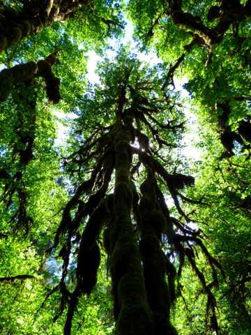 雨林树木图片