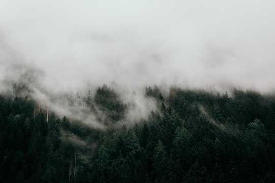 白茫茫的雾景色图片