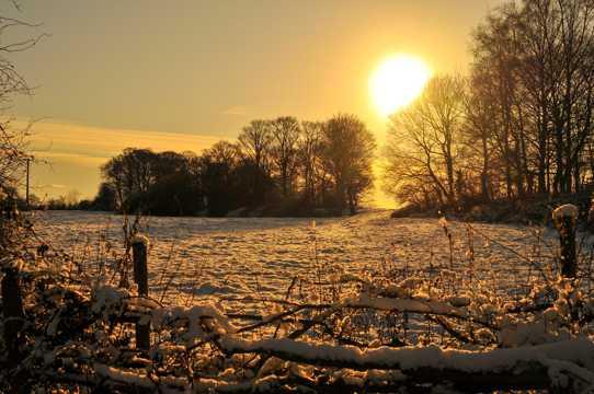 冬季雪地朝阳图片