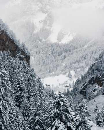 冬日雪域高山杉森林图片
