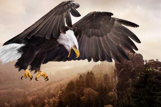 展翅雄鹰拍摄图片