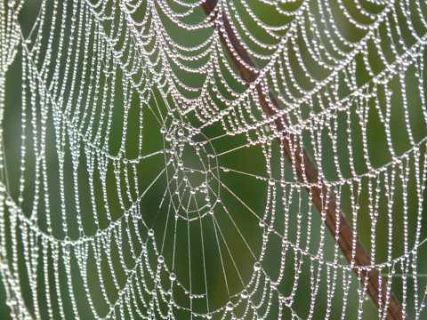 银光闪闪的蜘蛛网图片