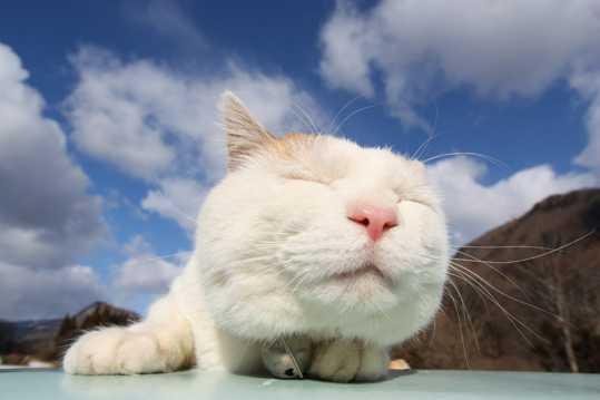 呆萌可爱的大脸猫