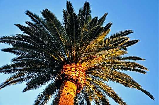 棕榈树近景图片