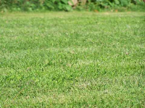 绿色青草原图片