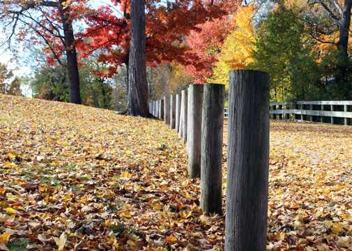 秋季公园景象图片
