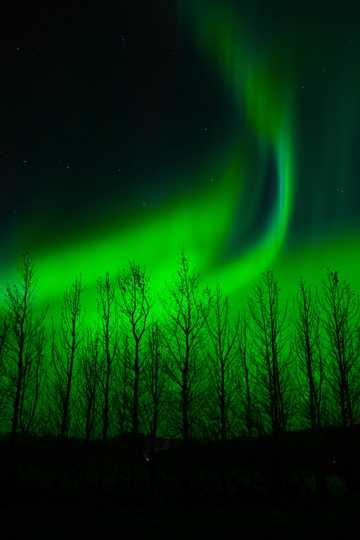 艳丽梦幻绿色极光图片
