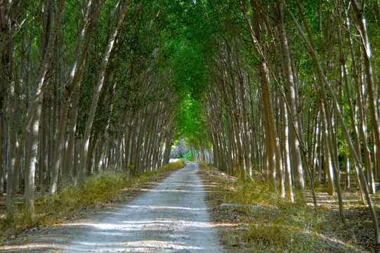 树林美景高清拍照图片