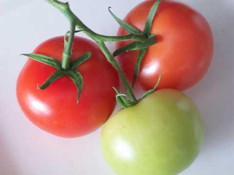 未成熟的番茄