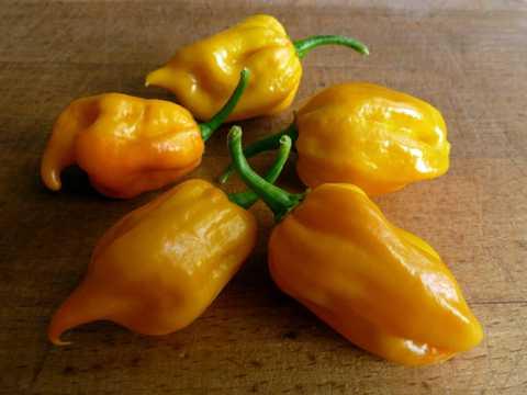 黄色菜椒图片