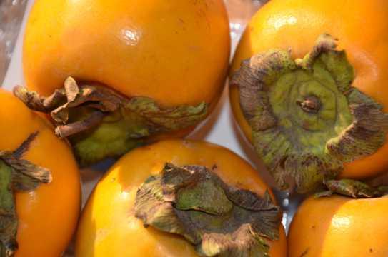 秋日柿子图片