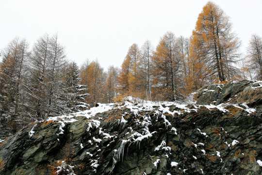 树林雪松景致图片