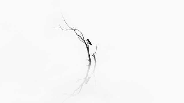 白色背景下树枝小鸟图片