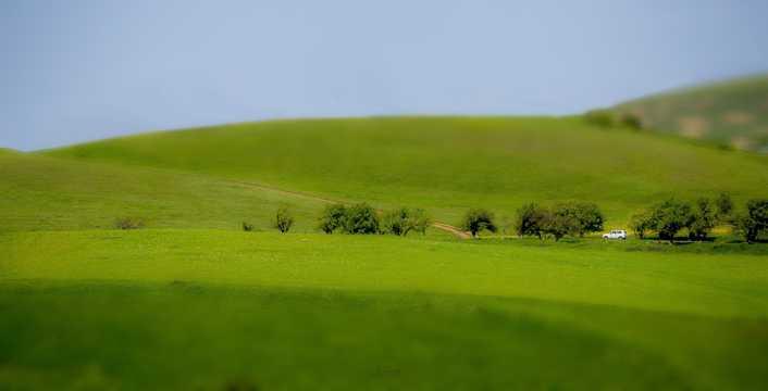 春季绿色草场图片