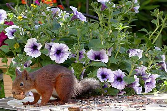 小松鼠吃坚果图片
