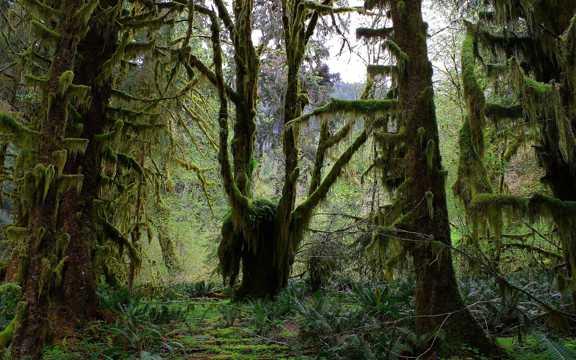 深山原始丛林图片