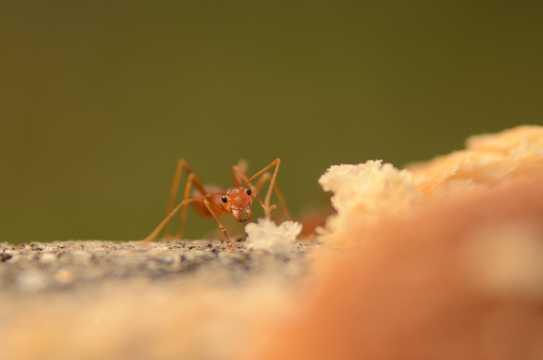 小巧的蚂蚁图片